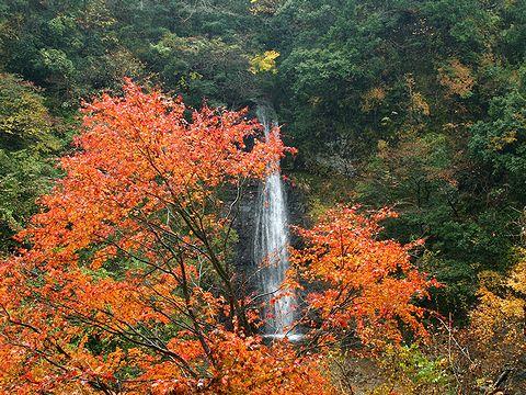 源太夫滝と紅葉・阿瀬渓谷/豊岡市日高町
