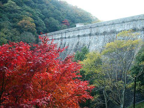 布引ダム(五本松堰堤・布引貯水池)の紅葉/神戸市六甲山