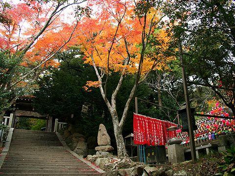 再度山・大竜寺の紅葉/神戸市六甲山