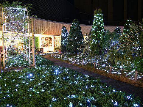 神戸国際会館SOLのクリスマスイルミネーション/神戸市中央区