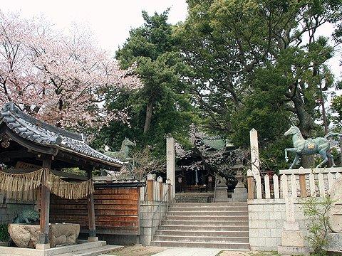 河内国魂神社・五毛天神の桜/神戸市の桜