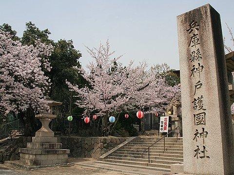 神戸護國神社の桜/神戸市の桜