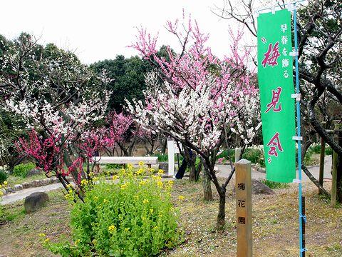 神戸須磨離宮公園の梅林「梅花園」と菜の花/神戸市