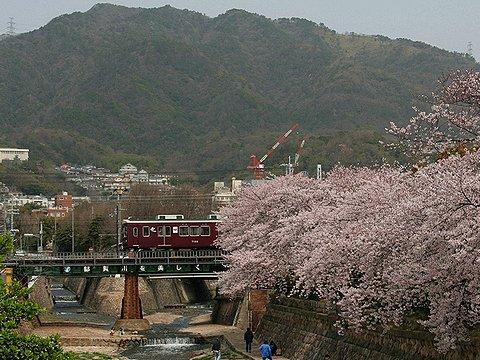 都賀川の桜と阪急電車・背後の山は六甲山