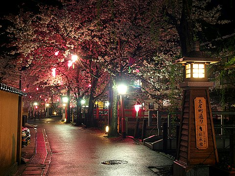 豊岡市城崎温泉・大谿川の桜のライトアップ