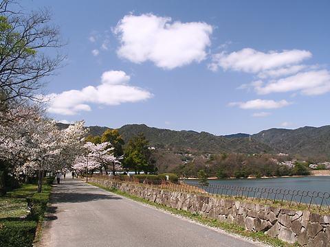 北山貯水池の桜と六甲山の風景/西宮市