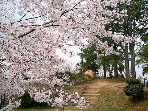 西山公園の桜/たつの市