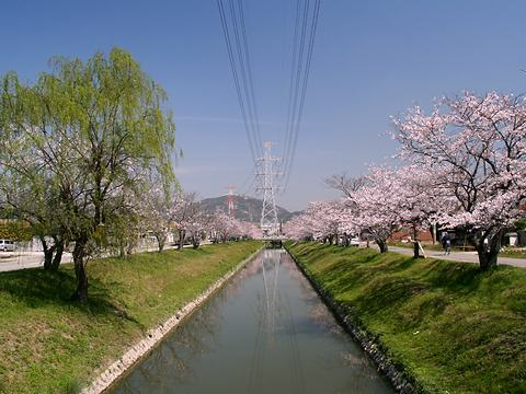 鹿島川の桜並木/高砂市