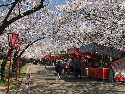日岡山公園桜のトンネル/加古川市