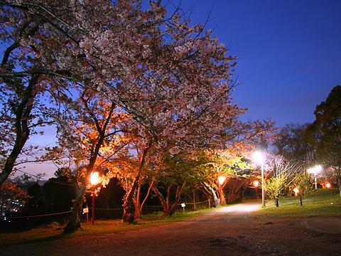 日笠山公園の夜桜/姫路市