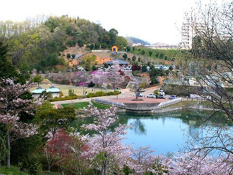 丸山公園の桜/加西市
