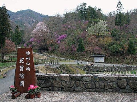 山崎花菖蒲園