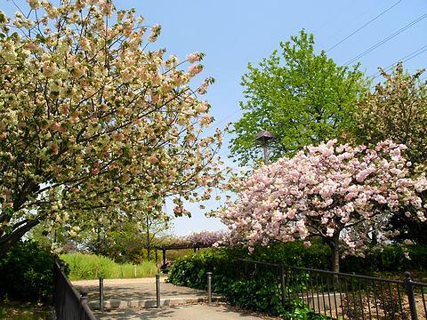尼崎農業公園春の花・八重桜/尼崎市