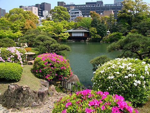 相楽園のつつじの花/神戸市中央区