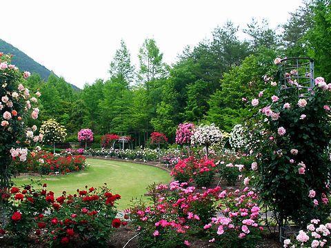 薔薇(バラ)の花・北播磨余暇村公園バラ園/多可町