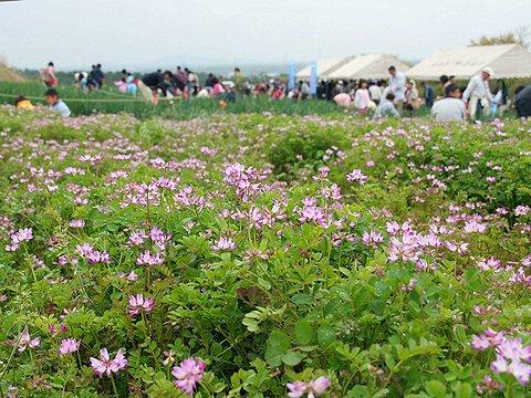 見土呂(みとろ)フルーツパークのレンゲ畑とレンゲまつりの会場/加古川市