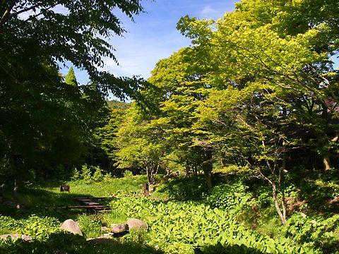 六甲山高山植物園/神戸市灘区六甲山町