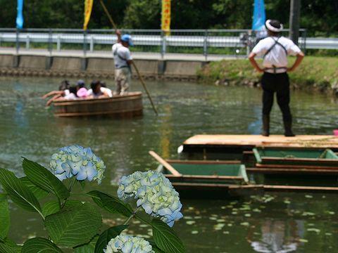 たらい舟でジュンサイ摘みを体験/ジュンサイまつり