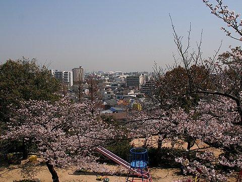観音山公園の桜と神戸市街地の風景
