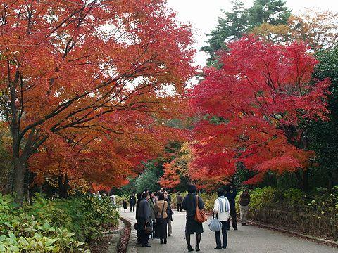 神戸森林植物園の紅葉/神戸市六甲山