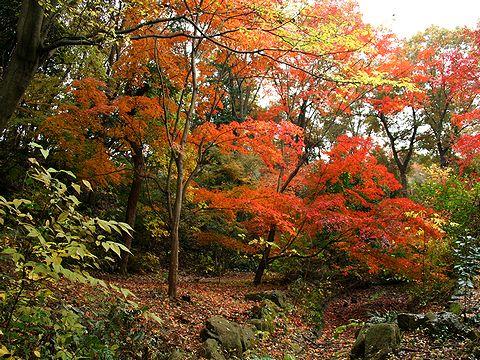 三木山森林公園の紅葉/三木市