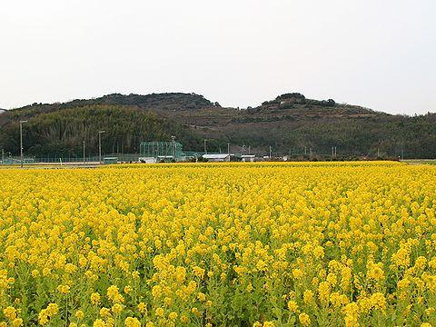 満開の菜の花畑と綾部山梅林・御津町黒崎菜の花畑/たつの市