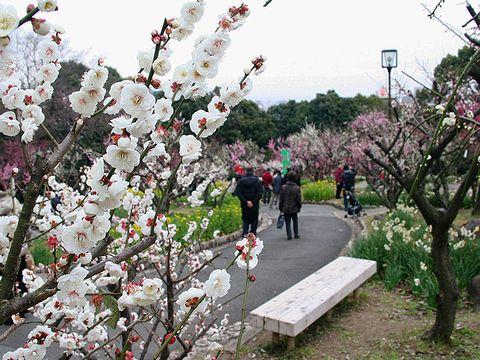 神戸須磨離宮公園の梅林「梅花園」/神戸市