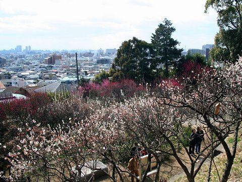 岡本梅林公園と神戸の風景/神戸市