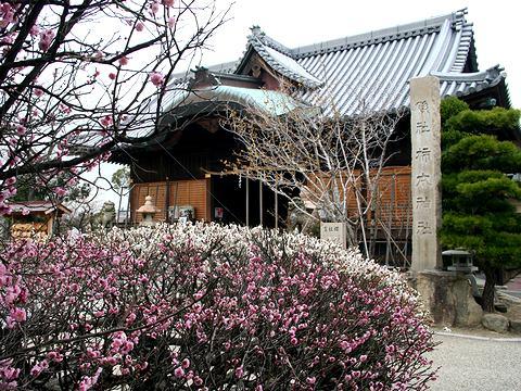 八房の梅・柿本神社/明石市