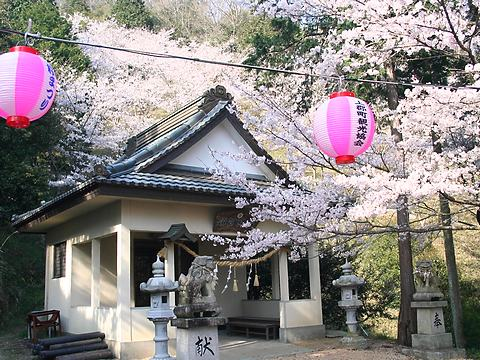 鈴の宮公園の桜並木/上郡町