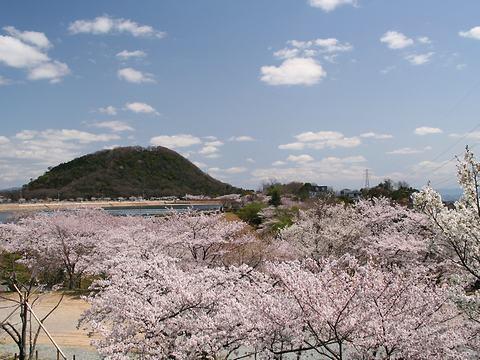 北山貯水池の桜と甲山/西宮市