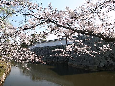 赤穂城の桜/赤穂市