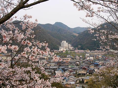 西山公園の桜・正面の建物は東山公園志んぐ荘/たつの市