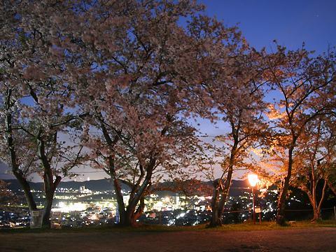 日笠山公園の夜桜と姫路の夜景/姫路市