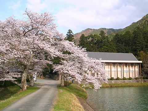 水分かれ公園と高谷川の桜と夜桜ライトアップ/丹波市
