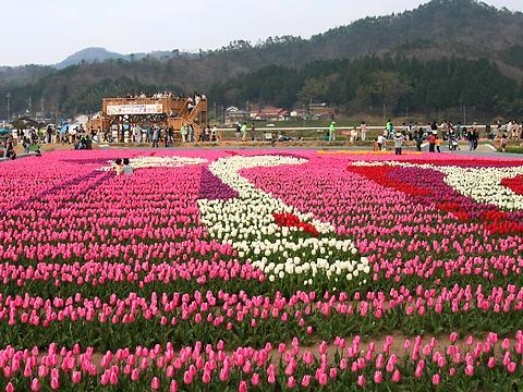 2007年たんとうチューリップ祭り・コウノトリの花絵/豊岡市但東町