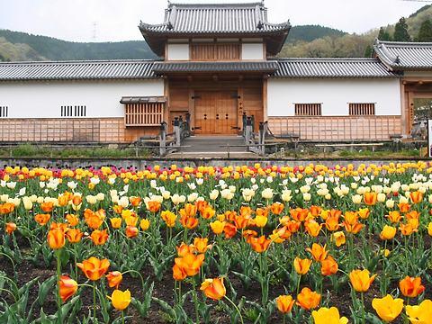三日月藩乃井野陣屋チューリップ園/佐用町