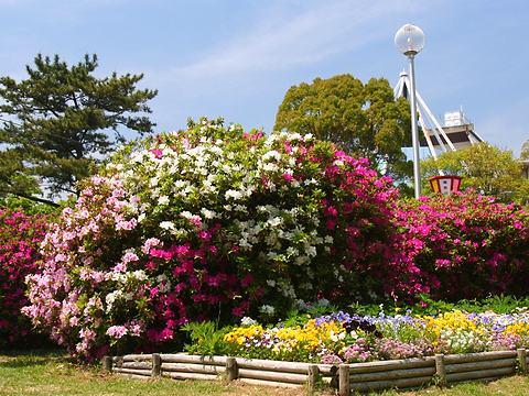 日岡山公園のツツジと春の花/加古川市
