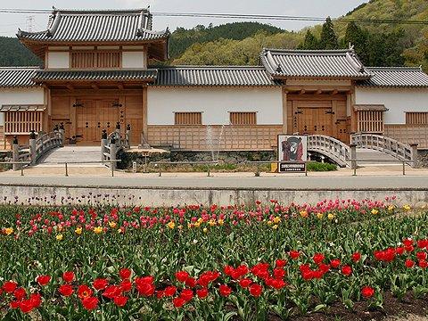 乃井野陣屋跡チューリップ園/佐用町乃井野(旧 三日月町)