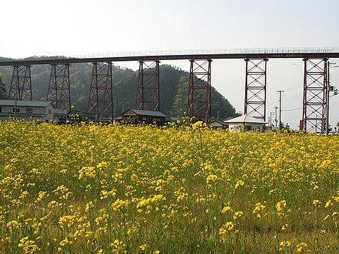 余部鉄橋と菜の花畑