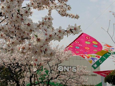 東洋ナッツ食品(株)のアーモンドの木