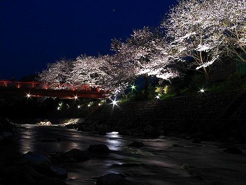 夢千代の里・湯村温泉と桜並木のライトアップ
