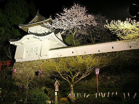 出石城と桜のライトアップ/但馬の小京都・出石の夜景