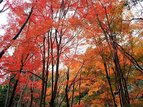 二本松・堂徳山の紅葉/神戸市六甲山