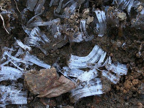 霜柱の写真画像・冬の写真素材