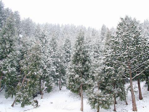 春の吹雪・瀞川平と但馬高原の春の雪写真画像/香美町
