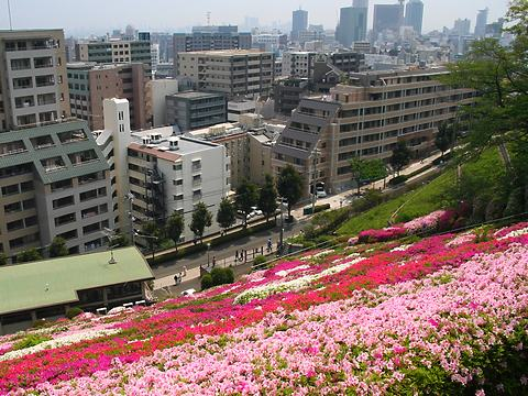 北野浄水場(北野配水場)のツツジ(躑躅)の花と神戸の風景/神戸市中央区