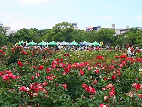 明石公園バラ園と時のウィーク2007・時の記念日イベント in 明石公園/明石市
