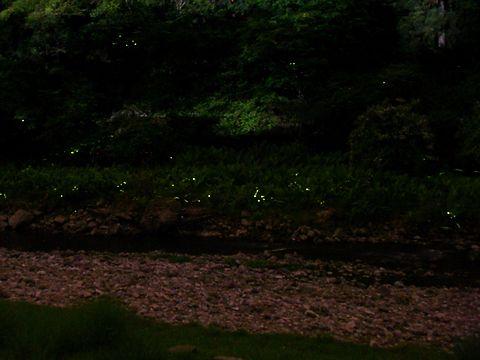 八千代町ホタルの宿路・ホタルの光跡/多可町八千代区俵田