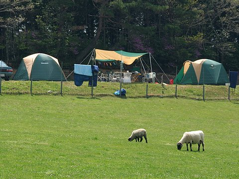 羊の放牧場とオートキャンプ場/三田 柴田ファーム